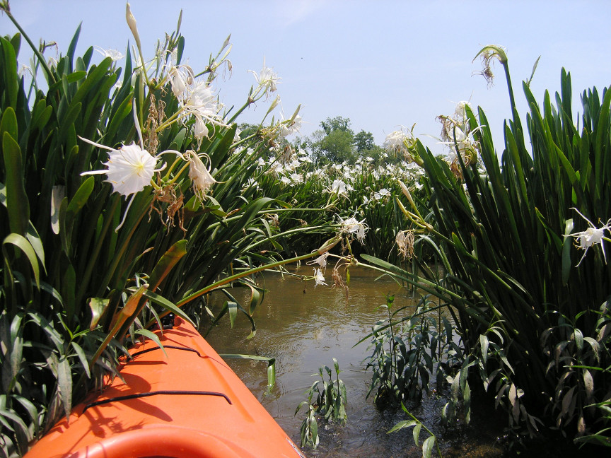 Rocky Shoals Spider Lilies and a kayak, two great sources of family fun at Landsford Canal State Park.